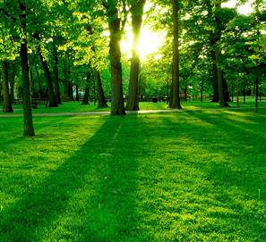 Medioambiente o medio ambiente - junto o separado