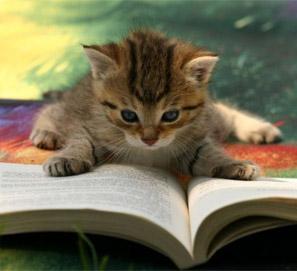 Oda al gato, de Pablo Neruda