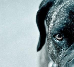 Una selección de 7 novelas de perros