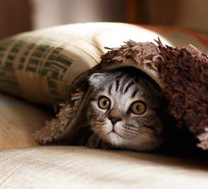 Dar gato por liebre, haber gato encerrado y buscarle tres pies al gato